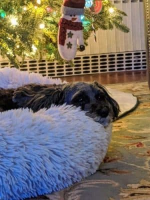 Comfy Calming™ Dog Bed photo review